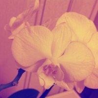 Orchideya :: Кирилл Ельцов