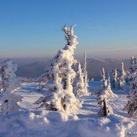 Тролли сказочного леса :: Любовь Шихова