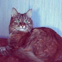 Кошка боится) :: Yana Elistratova