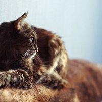 Кошка задумчиво смотрит в даль.. :: Yana Elistratova