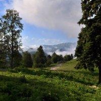 зеленые горные луга :: Дмитрий Грибанов