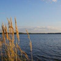 Десногорское водохранилище. :: Сергей Плесовских