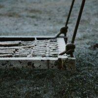 Заморозки :: Zlata Tsyganok