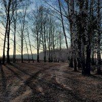 ...лес обнажился... :: Виктор Берёзкин