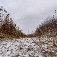 А снег всё больше укрывал, тропинки летней жизни.......... :: Анатолий Клепешнёв