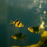 аквариум :: gribushko грибушко Николай