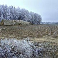 Осенний иней :: Андрей Куприянов