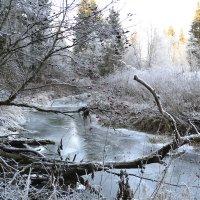 В поисках зимы :: Люда Свой край