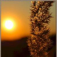 Небес вечернее сиянье :: Nina Streapan