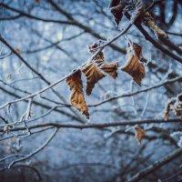 Осень, пока! Близко зима.. :: Daria Krutikhina