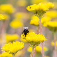 Пчела :: GeraS | Photo