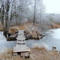 Морозный бесснежный ноябрь. :: Hаталья Беклова