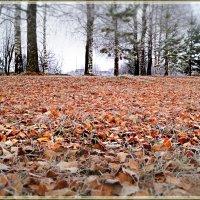 На ковре из жёлтых листьев... :: Cerg Smith