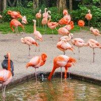 Фламинго :: Александр Гапоненко