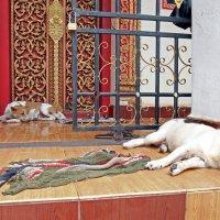 Лаос. Вьентьян. Монастырские собаки :: Владимир Шибинский