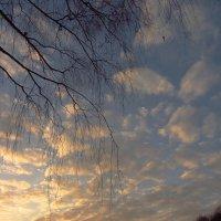 IMG_5858 - Закатный час в ноябре :: Андрей Лукьянов
