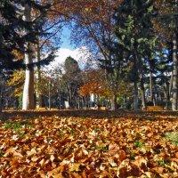 Осеннее раздолье :: Наталья Джикидзе (Берёзина)
