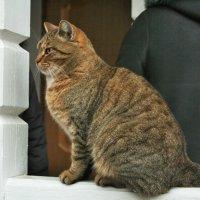 монастырский кот :: Yulia Sherstyuk