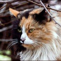 кошка :: Sergey Bagach