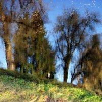 отражение в реке :: Алеся Старовойт