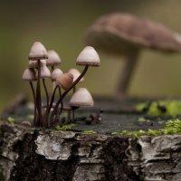 Лесные истории :: Natali-C C