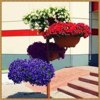 Городские цветы (5). :: Владимир Валов