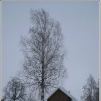 В деревеньке :: muh5257