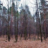 Осенний лес :: Ростислав