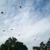 Голуби в небе :: Валерия