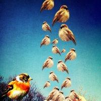 Птичий взрыв головы :: Эльза Вайнер