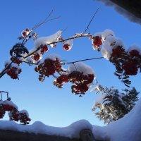 Окно в зиму :: LORRA ***