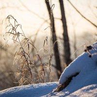 Морозное солнце :: Дмитрий Люльчак