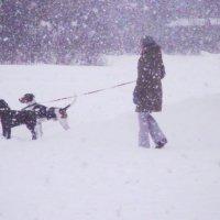выгул собачек в снегопад :: Анатолий Бугаев