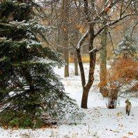 Прохладное дыхание ноября. :: Валентина ツ ღ✿ღ