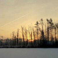 рассвет в зимнем лесу :: Вячеслав Завражнов