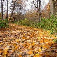Осень :: Yury Novikov