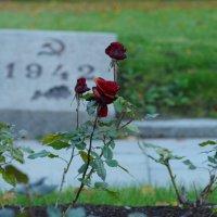 Братская могила на Пискарёвском мемориале :: Yuni Hawk