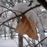 Последний кленовый листочек :: Нина Корешкова