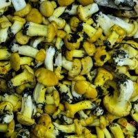 Желтые грибочки :: Алексей Денисов