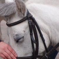 я люблю свою лошадку... и она меня :: Natalia Mihailova