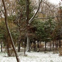 еще не зима, уже не осень :: Александр Корчемный