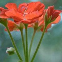 Цветок такой мещанский,но красивый...))) :: Milocs Морозова Людмила