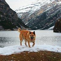 хозяин Альпийских гор :: Natalia Kalyva