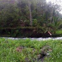 горная река Аюнг,Бали :: Александр