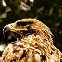 орёл - гордая птица :: Владимир Родин