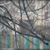 во дворе :: Татьяна Силютина