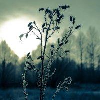 Зима - закат :: Дмитрий Колесников