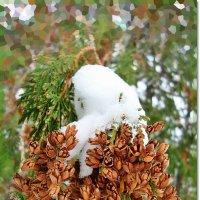 Шапочка из снега :: Лидия (naum.lidiya)