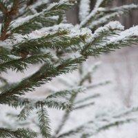 Winter :: Елена Т.