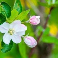 сады цветут :: Тася Тыжфотографиня